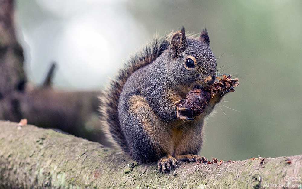 great-atmosphere-happy-squirrel-eating-corn-amazing-nature-animals-scrouil-beautiful-photography-scenery-HD-wallpaper-236-1