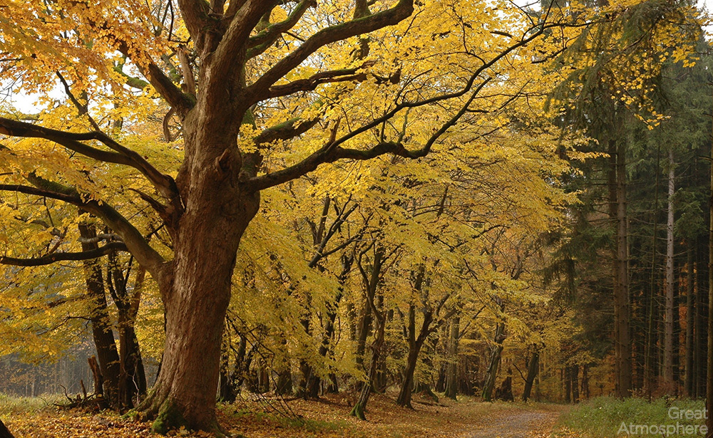 great-atmosphere-trees-with-yellowed-leaves-and-evergreen-trees-beautiful-landscapes-photography-nature