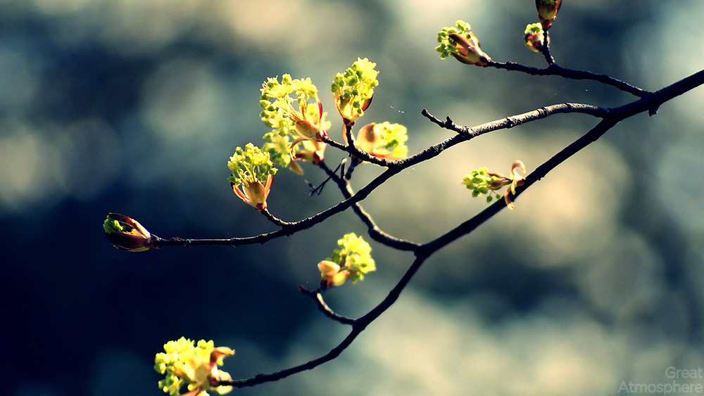 spring natural scenery hd - photo #27