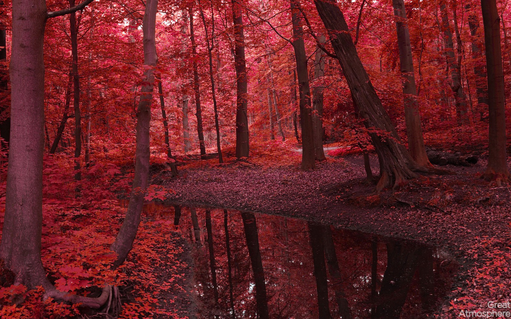 red fall wallpaper - photo #4