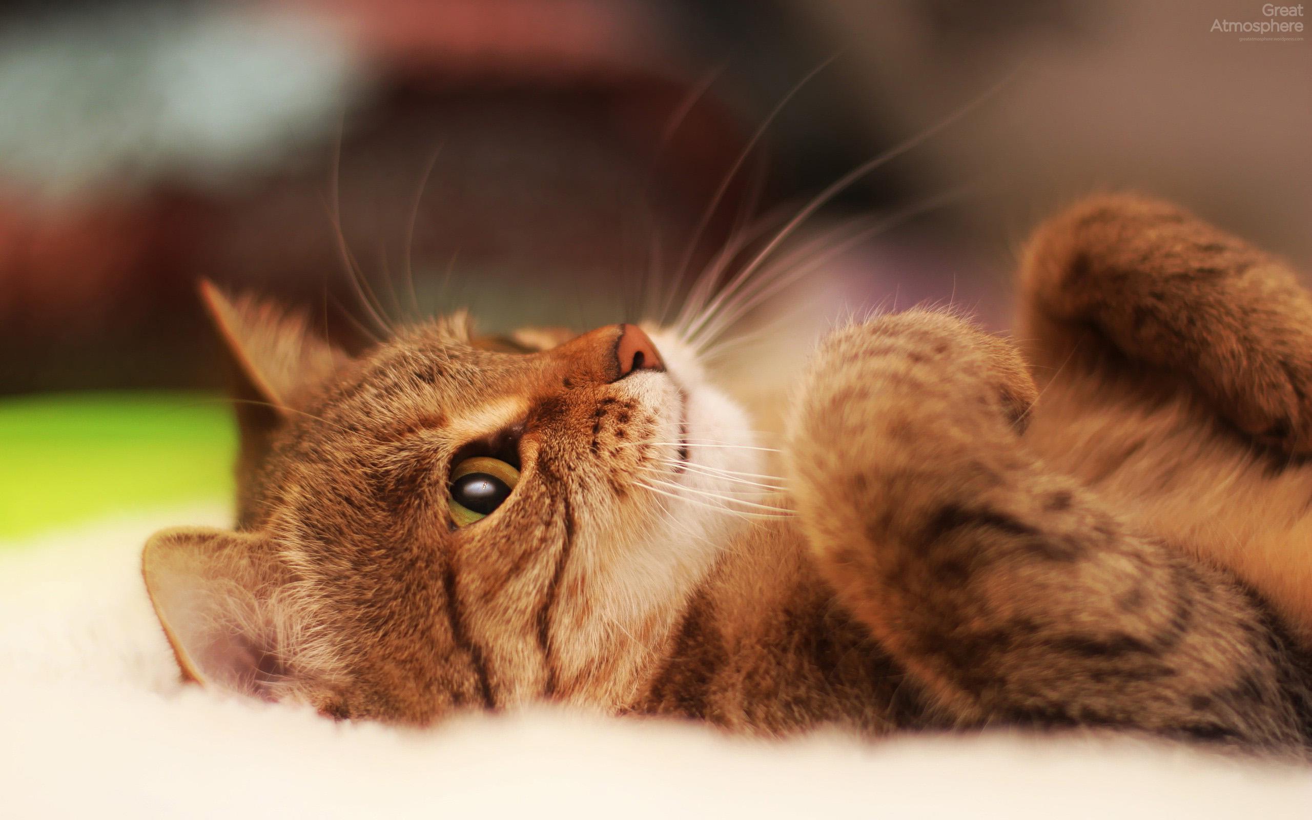 catwhiskersbeautifulanimalphotographygreatatmosphere