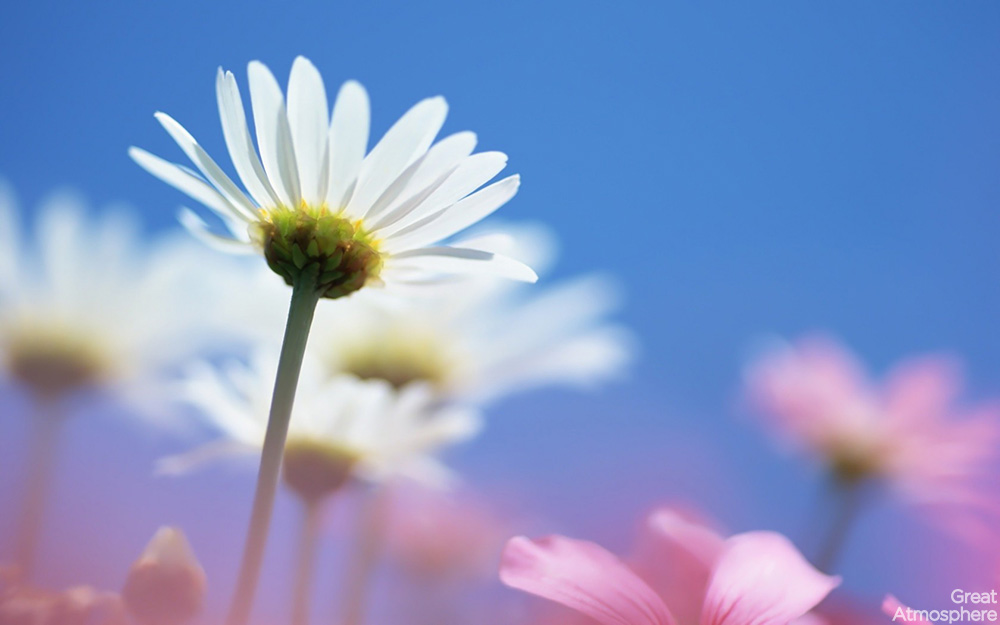 daisies_flowers_field_sky_summer_blurring_beautiful_nature_landscapes_photography