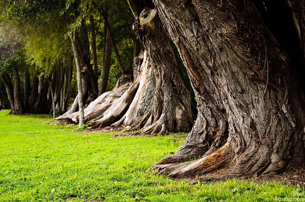 old-tree-trunks-summer-nature-relaxation-blur-landscape-art-photography-wallpaper-great-atmosphere