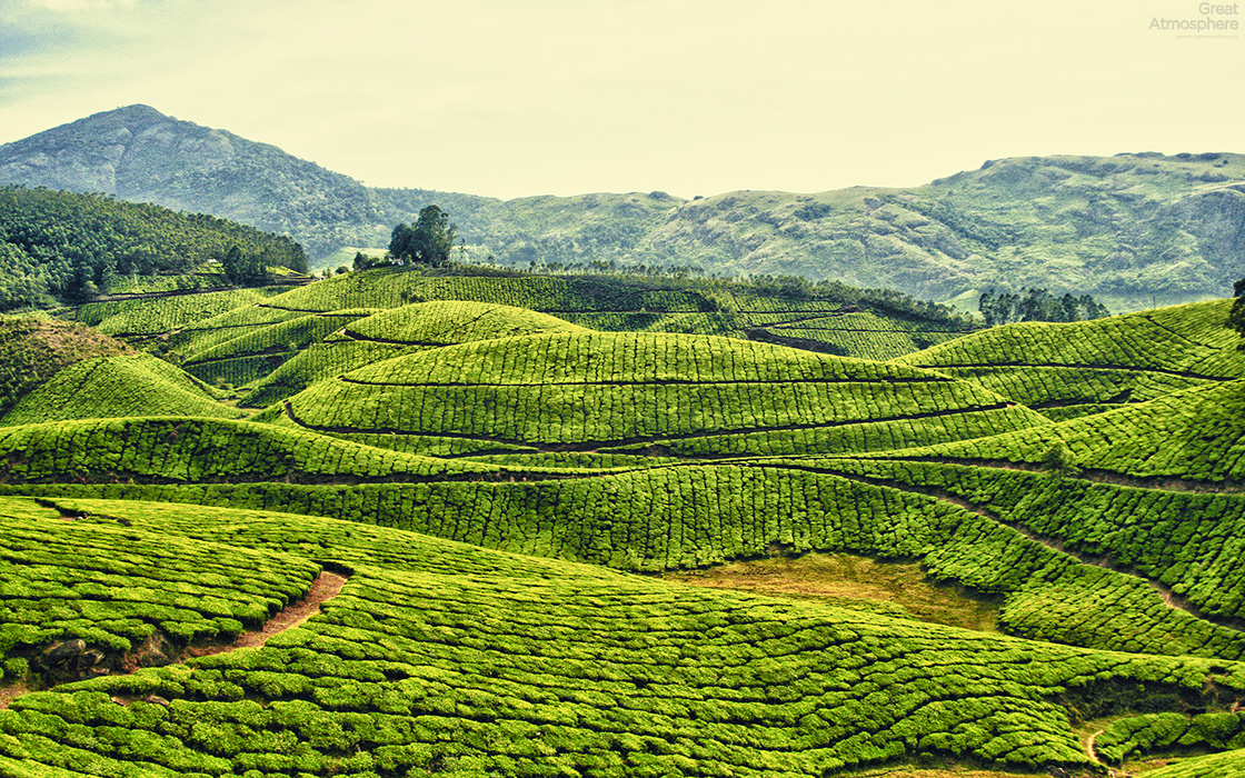 tea-plantations-kerala-india-travel-landscapes-photography-green ...