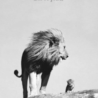 Someday All This Will Be Yours, The Lion King is REAL