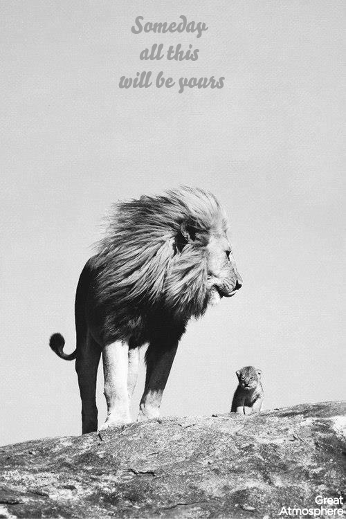 Someday-All-This-Will-Be-Yours-great-atmosphere-real-lion-king-photography